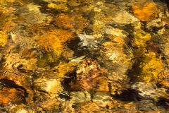 Golden water in stream in Boulder, Colorado Royalty Free Stock Images