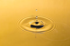 Golden water and water drop Stock Images