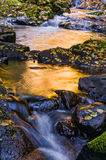 Golden Waters. Golden sun reflects off the waters of a creek in the Oregon coast range in Autumn Royalty Free Stock Photo