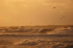 Free Golden Waves Stock Image - 4099311
