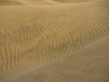 Golden wavy sand texture. Over desert dunes Stock Images