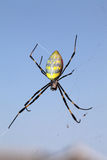 Golden-web spider. Against a clear blue sky Stock Photography