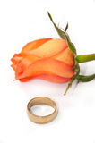 Golden wedding ring with orange rose on white background Royalty Free Stock Photography