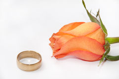 Golden wedding ring with orange rose on white background Stock Images