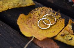 Golden wedding rings on a autumn leaf close-up. Golden wedding rings on a autumn leaf close-up with wooden bench in the background Royalty Free Stock Photo