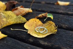 Golden wedding rings on a autumn leaf close-up. Golden wedding rings on a autumn leaf close-up with wooden bench in the background Royalty Free Stock Images
