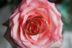 Golden wedding rings on bridal bouquet. royalty free stock image