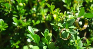 Golden wedding rings hanging on green branch stock video footage