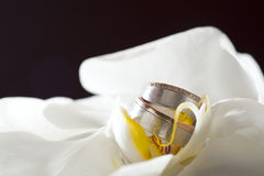 Golden wedding rings laying on white orchid Stock Images