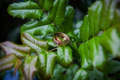 Golden wedding rings lie on leaves green plant. Royalty Free Stock Photos