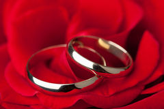 Golden wedding rings over red rose Stock Image