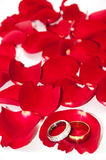 Golden wedding rings on the petals of red rose Stock Photo