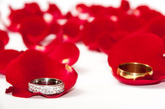Golden wedding rings on the petals of red rose Royalty Free Stock Images