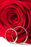 Golden wedding rings and red rose isolated Royalty Free Stock Photos