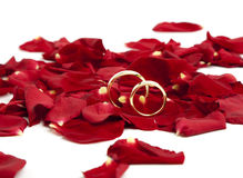 Golden wedding rings on red rose petals. Pair of golden wedding rings on red rose petals royalty free stock images