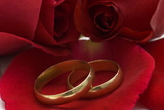 Golden wedding rings and red roses. Royalty Free Stock Image