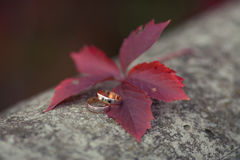 Golden wedding rings shabby background. Golden wedding rings on red grape's leaf Royalty Free Stock Photography