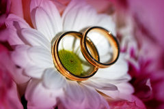 Golden wedding rings on the spring white and purple flowers Royalty Free Stock Images