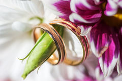 Golden wedding rings on the spring white and purple flowers Stock Photography