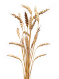 Golden Wheat Stock Image