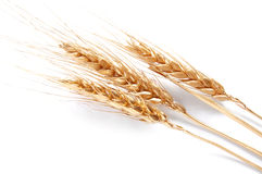 Golden wheat. Isolated on a white background Royalty Free Stock Photos