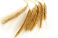Golden Wheat Royalty Free Stock Photo