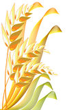 Golden wheat. Abstract with white background Stock Photo