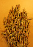 Golden wheat. A bundle of wheat on yellow background Stock Photos
