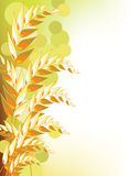 Golden wheat abstract. Of beige background with floating spheres Royalty Free Stock Photography