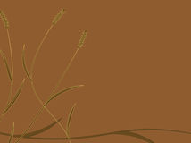 Golden Wheat Background Royalty Free Stock Photography