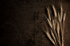 Golden Wheat. On dark background to the right side of the frame royalty free stock images