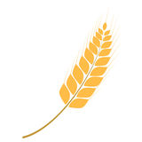 Golden wheat ear simple vector illustration Royalty Free Stock Photography