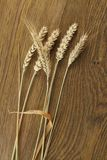 Golden Wheat Ears Stock Images