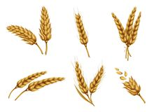 Golden wheat ears and grains realistic vector set Royalty Free Stock Images