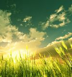 Golden wheat field. 3d image Stock Photography