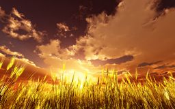 Golden wheat field. 3d image Stock Photo