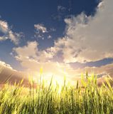 Golden wheat field. 3d image Stock Photos
