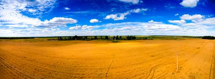 Golden wheat field with blue sky above. Summer landscape stock image