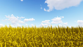 Golden wheat field with blue sky 3D render.  Stock Images