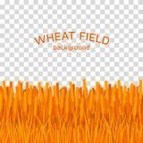 Golden wheat field on checkered background. Colorful vector illustration Stock Photos