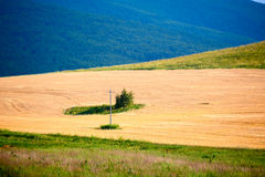 The golden wheat field and forest Stock Photo