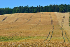 Golden wheat field before harvest Stock Photography