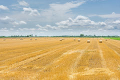 Golden wheat field harvesting Stock Images