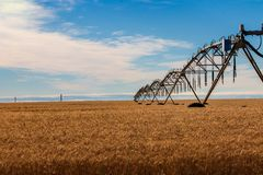 Golden wheat field with irrigation watering system and blue sky with clouds stock photos
