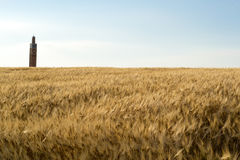 Golden wheat field and mosque landscape Stock Image