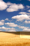 Golden Wheat Field and Puffy Clouds Royalty Free Stock Images