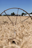 Golden wheat field Sprinkler system with wheels Royalty Free Stock Photos