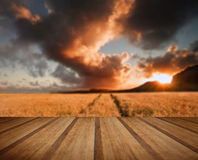 Golden wheat field under dramatic stormy sky landscape with wood Royalty Free Stock Photos