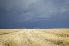 Golden wheat field with a very dark thunderous storm clouds over head. Royalty Free Stock Photo