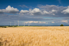 Golden wheat field and wind turbines Royalty Free Stock Photo
